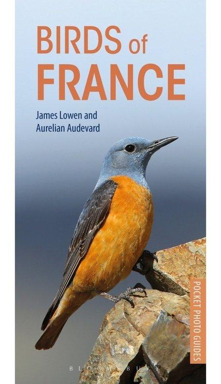Birds of France | vogelgids Frankrijk 9781472949011 James Lowen, Aurelien Audevard Bloomsbury   Natuurgidsen, Vogelboeken Frankrijk