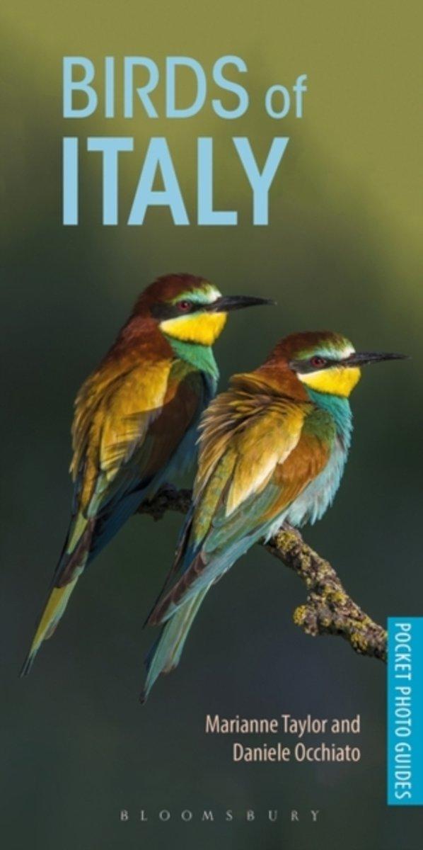 Birds of Italy   vogelgids Italië 9781472949820 Marianne Taylor, Daniele Occhiato Bloomsbury   Natuurgidsen, Vogelboeken Italië
