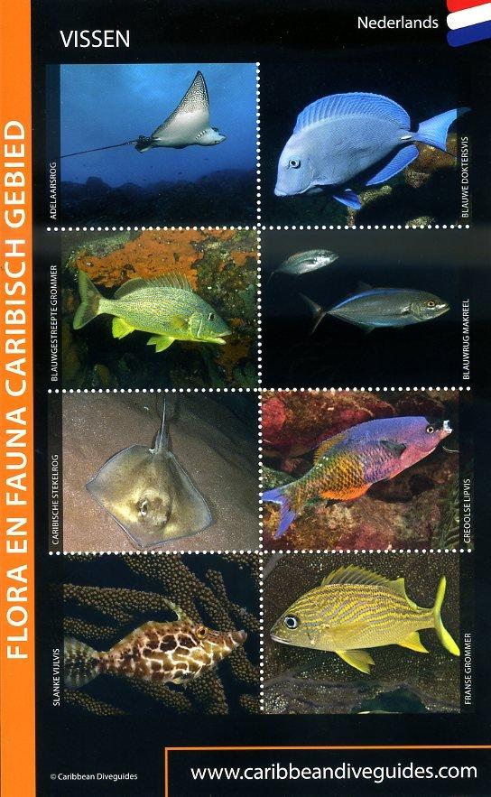 Flora en Fauna Caribisch Gebied - voor duikers en snorkelaars 10027517 Dolphins Dive Centre,  Marloes Otten Caribbean Diveguides   Duik sportgidsen Caribisch Gebied