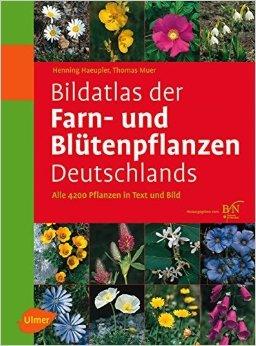 Bildatlas der Farn- und Blütenpflanzen Deutschlands 9783800149902 Häupler, Mür Verlag Eugen Ulmer   Natuurgidsen, Plantenboeken Duitsland