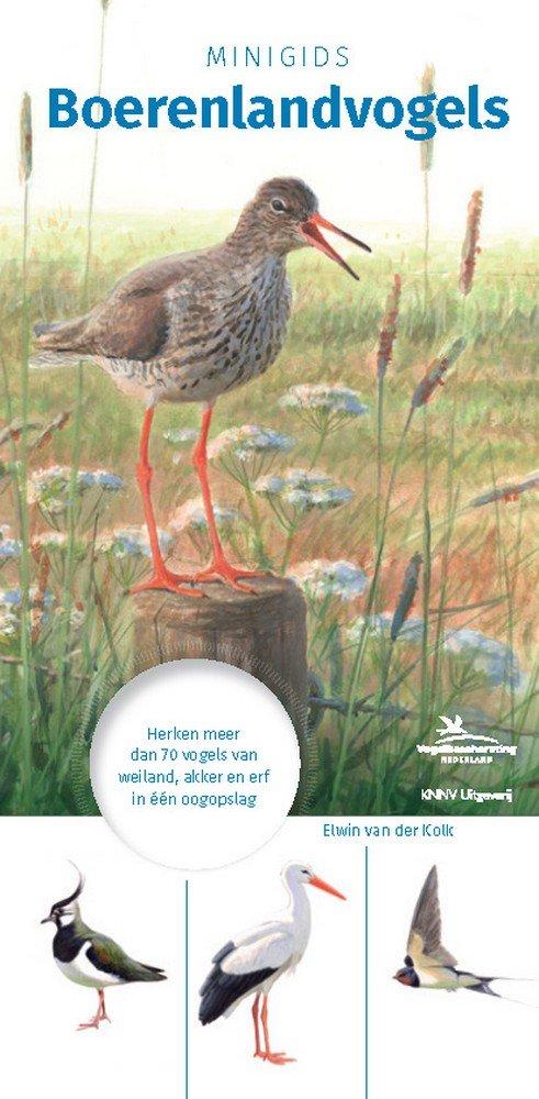 Minigids Boerenlandvogels 9789050116381 geïllustreerd door Elwin van der Kolk KNNV   Natuurgidsen, Vogelboeken Nederland